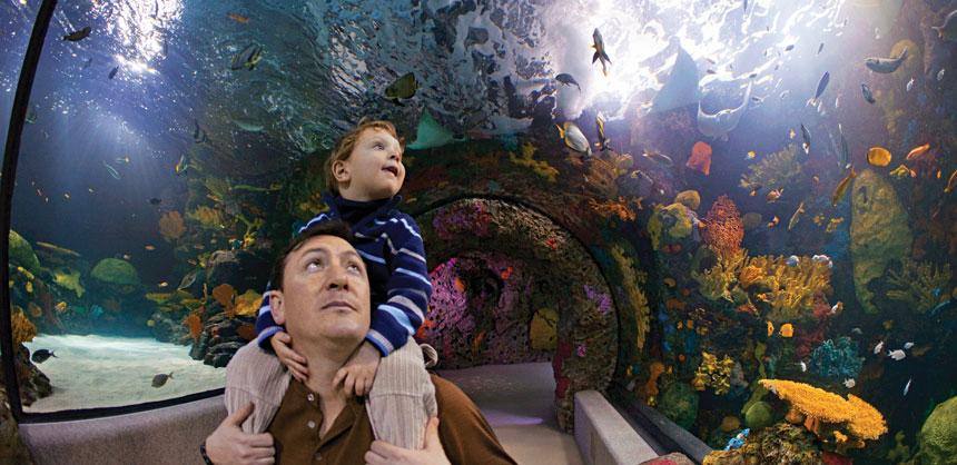 Attendees who meet in Virginia Beach marvel at the amazing exhibits and 800,000-gallon aquarium at Virginia Aquarium & Marine Science Center. Credit: Virginia Aquarium & Marine Science Center